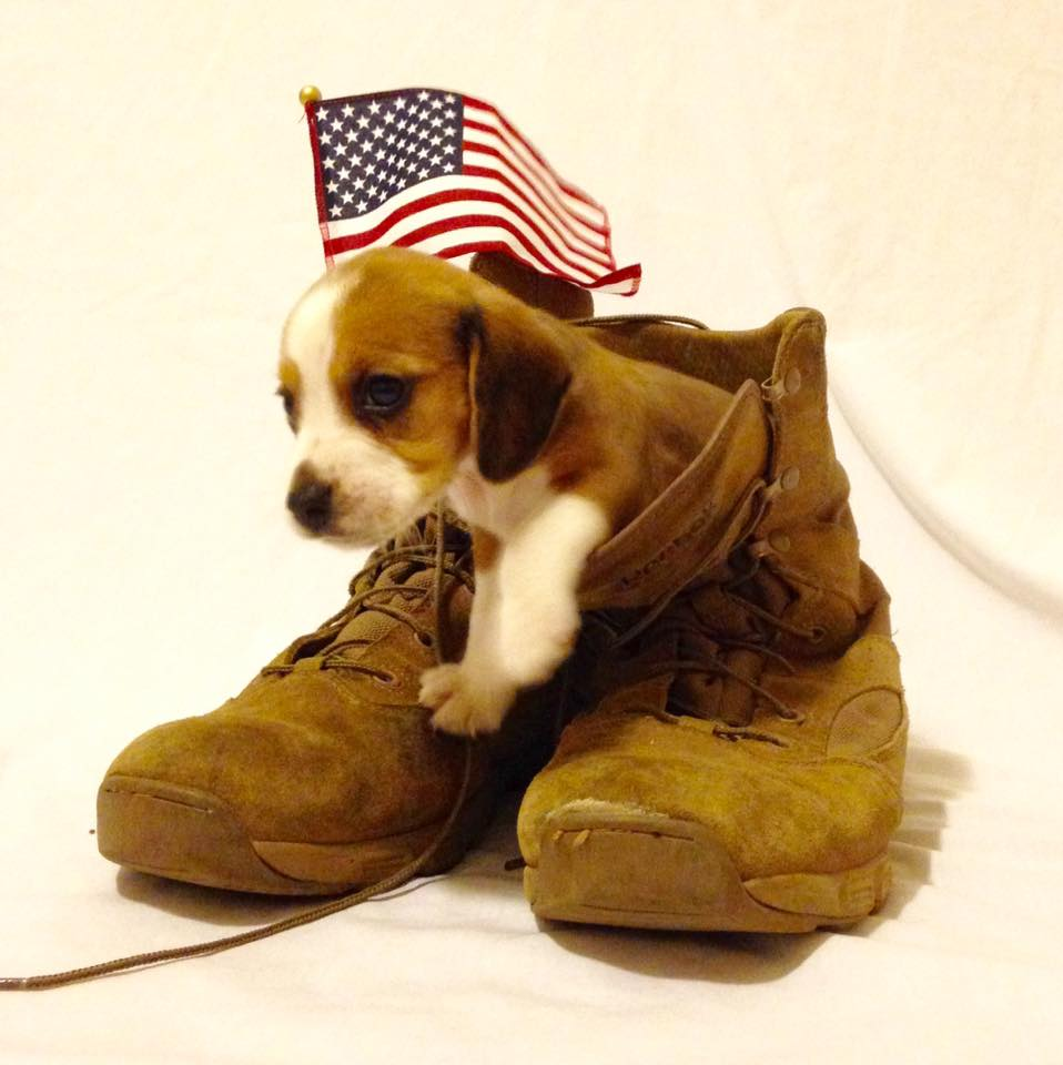 More than a Pet: The Best Friend Every Military Spouse Needs