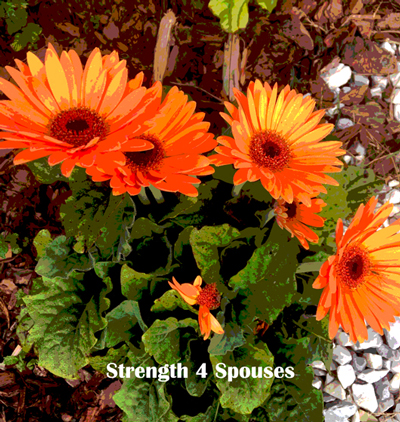 Life Lessons from Gerbera Daisies